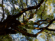 Mini guía de los árboles de Buenos Aires