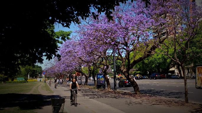 Jacarand la otra flor nacional que invade la ciudad en for Espectaculo para ninos buenos aires