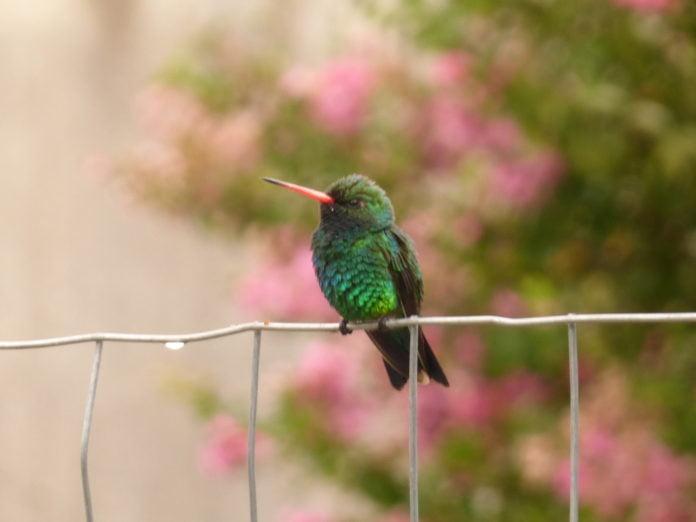 pájaros buenos aires