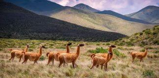 Animales Argentina