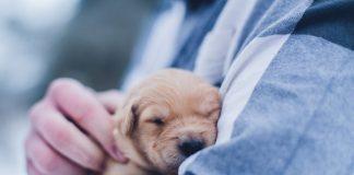 adoptar mascota buenos aires