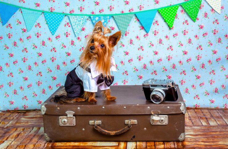 viajar con mascota buenos aires
