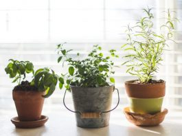 jardin plantas buenos aires