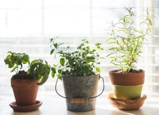 jardín plantas buenos aires