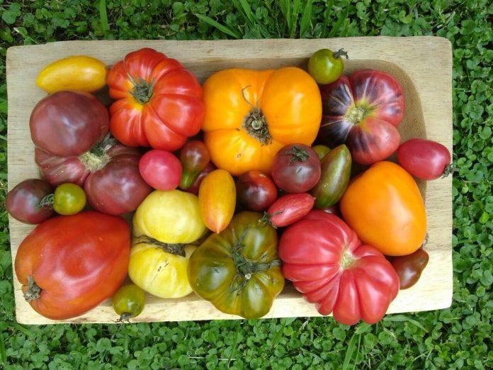 delivery frutas y verduras orgánicas