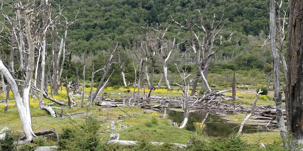 parc national ushuaïa