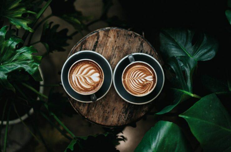 Café y plantas